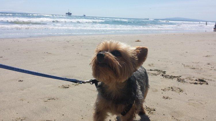 hb-dog-beach